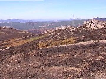 Los incendios dejan a los ganaderos en una situación crítica