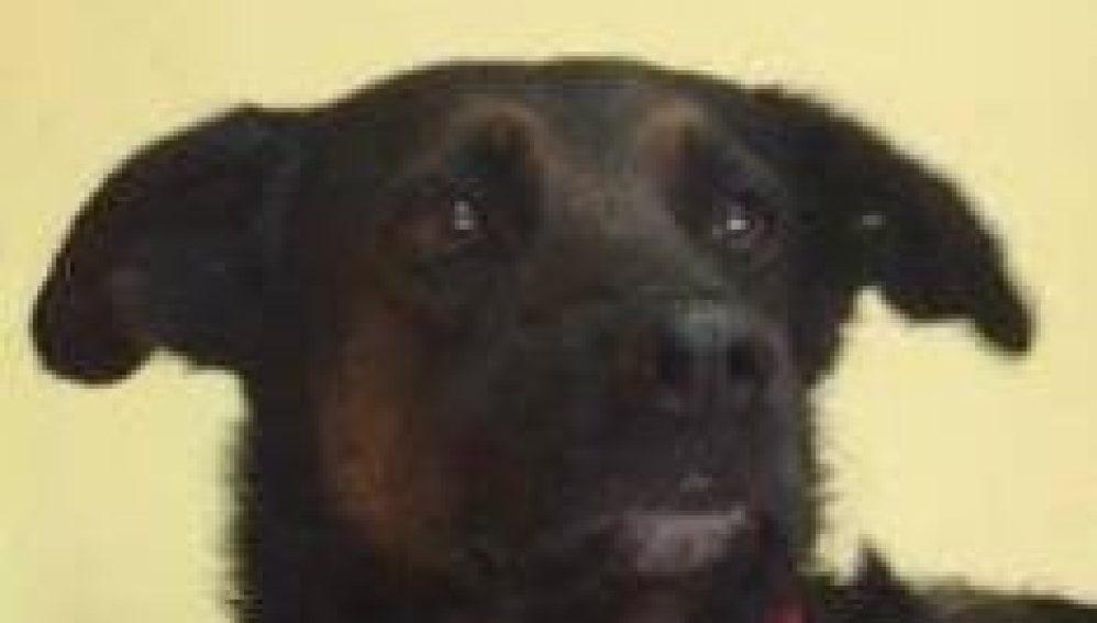 Yogi, el perro que murió en un incendio tras salvarse de los huracanes