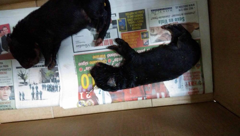 Los cachorros encontrados en un contenedor en Martos