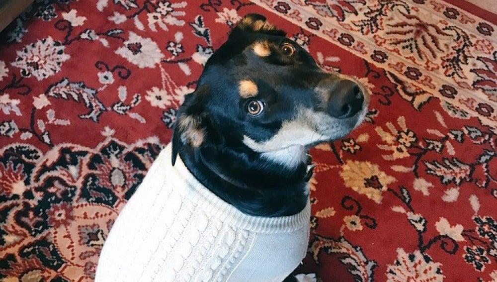 Sully, el perro que finge tos