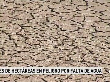 Situación extrema en los campos de regadío a consecuencia de la sequía