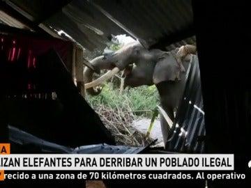 ELEFANTES DE DERRIBO