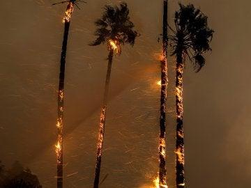 Las llamas devoran varias palmeras durante un incendio desatado en Ventura