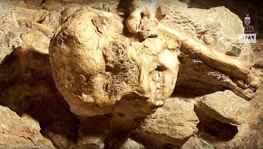'Little Foot', el fósil más completo de 'Austrolopithecus'