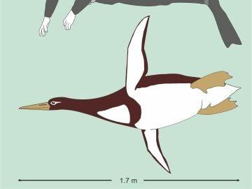 La nueva especie de pingüino