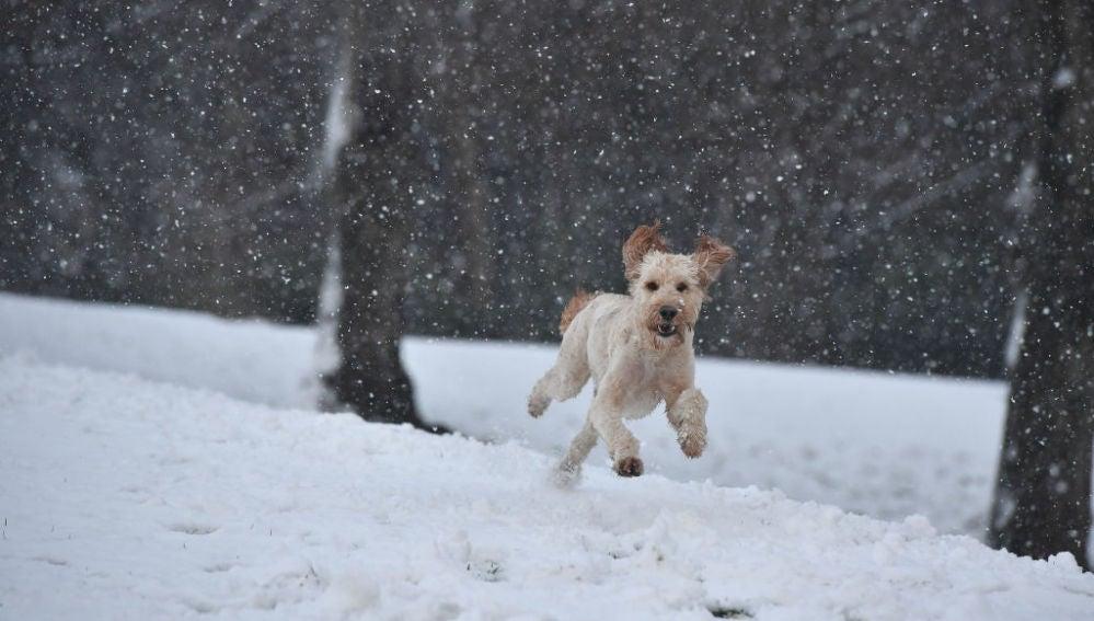 Un perro corriendo sobre la nieve