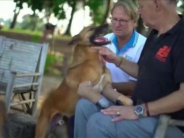 Unas prótesis dan una nueva vida a Cola, un perro al que le amputaron las patas por morder unos zapatos