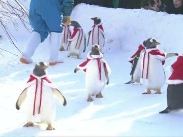 Pingüinos disfrazados de Papá Noel sorprende a los visitantes de un parque temático