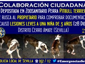 Buscan al dueño de una perra en Sevilla