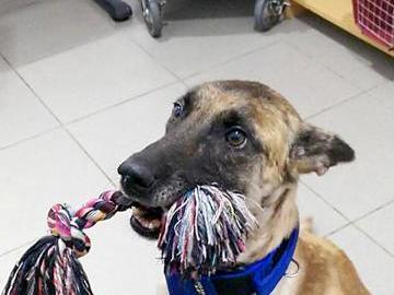 'Vespa', la perrita con una pata amputada que busca un hogar