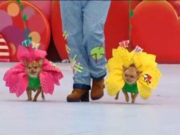 Las mascotas... también de Carnaval