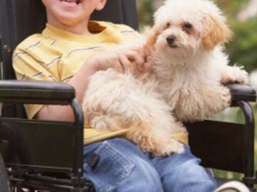 Un niño con discapacidad en una silla de ruedas con su perro