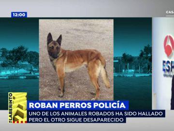 Las autoridades piden colaboración ciudadana por el robo de Leko, un perro especializado en la localización de explosivos