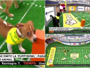 La Puppy Bowl, la versión canina de la Super Bowl