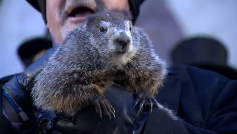 La marmota Phil indica que el invierno se alargará seis semanas más
