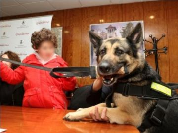 La perra más veterana de la unidad, Kenia, trabaja con una niña autista