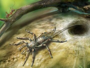 La araña con cola descubierta en ámbar