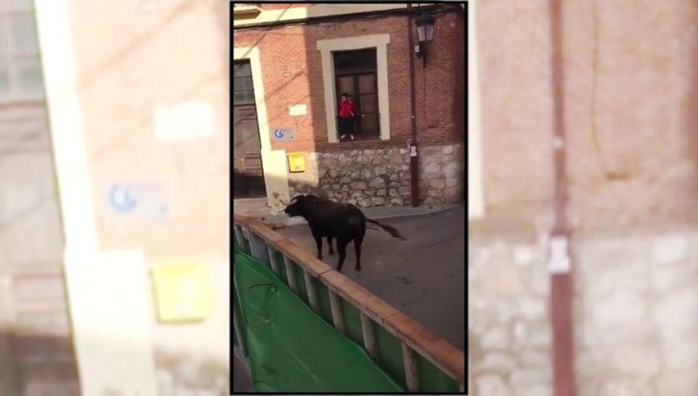 Un toro embiste un carrito de bebé durante unos encierros populares