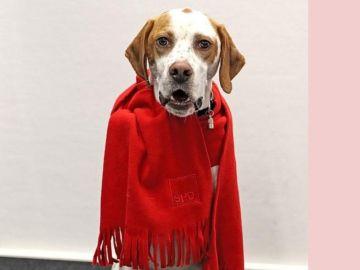 Lima luce incluso una bufanda del SPD