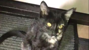 El gato al que metieron en el horno