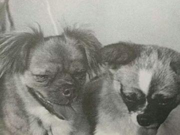 Los perros enviados al espacio por China