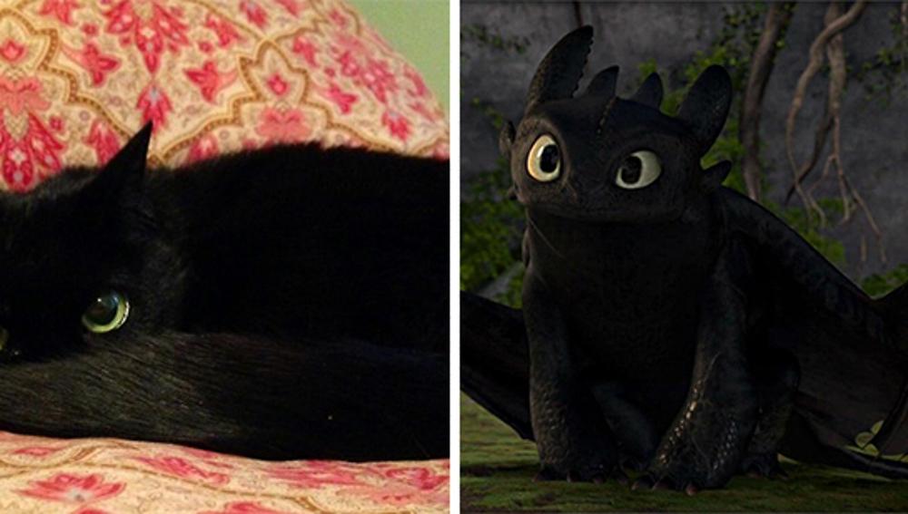 cat-looks-like-other-thing-lookalikes-celebrities-6__700.jpg