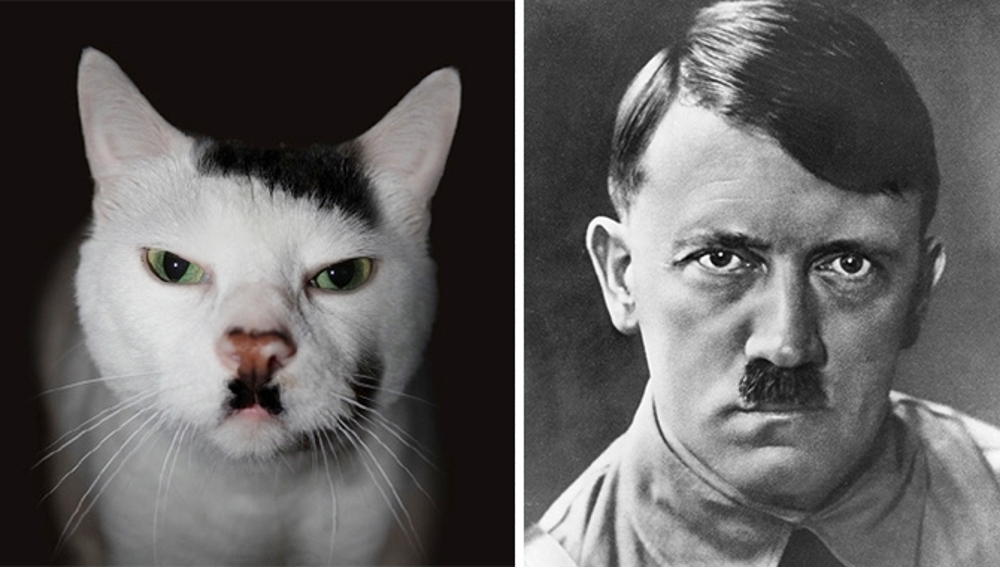cat-looks-like-other-thing-lookalikes-celebrities-38__700.jpg