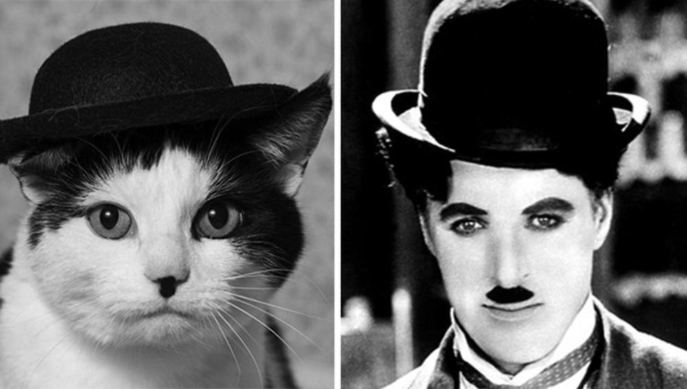 cat-looks-like-other-thing-lookalikes-celebrities-23__700.jpg