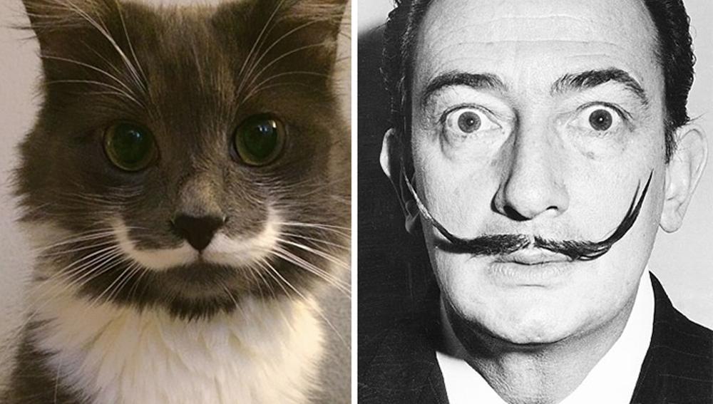 cat-looks-like-other-thing-lookalikes-celebrities-29__700.jpg