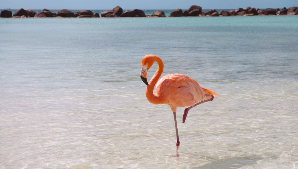 flamingo-standing.ngsversion.1396530994611.jpg