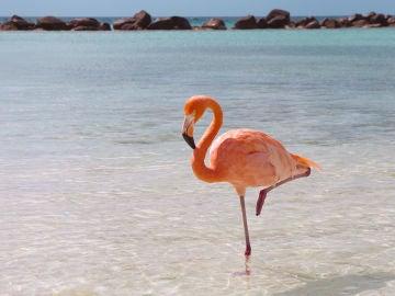 flamingo-standing.ngsversion.1396530994611.jpg
