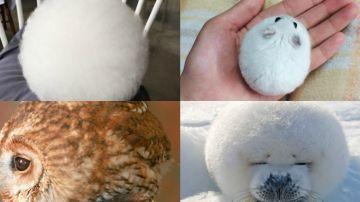 animalessredondoss.jpg