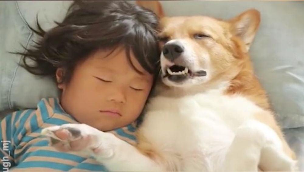 perrosdormiditos.jpg
