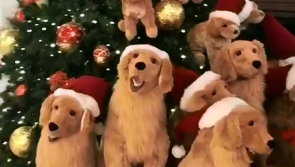 goldens.png