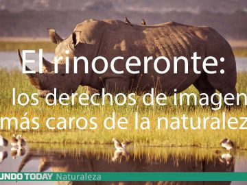 rinoceronteonte.jpg