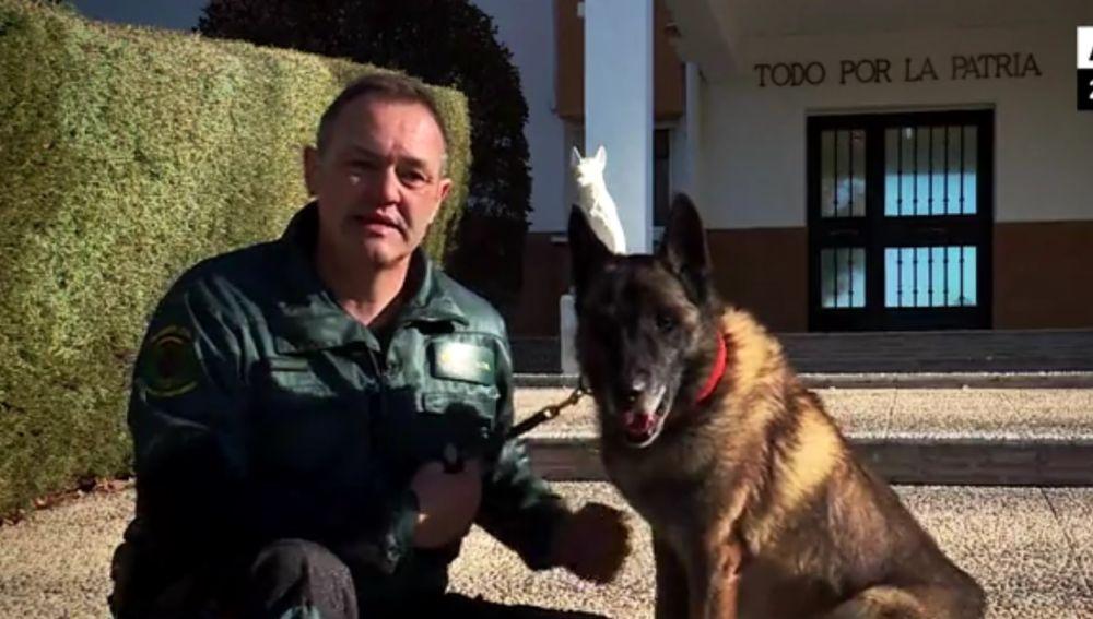 Elton, el perro que participa en la búsqueda de Gabriel