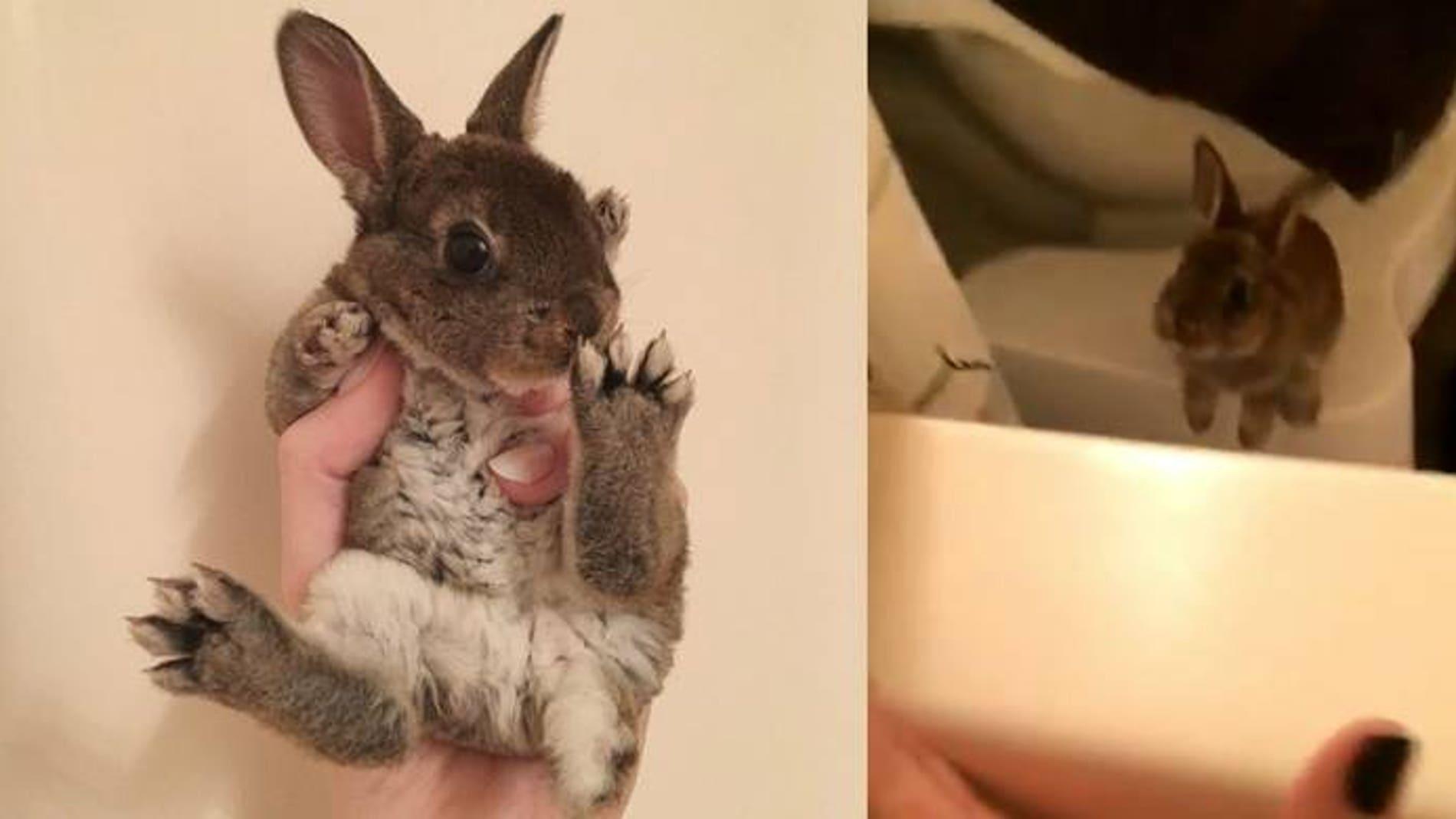 Tokki el conejo
