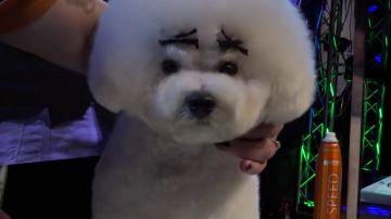 Decenas de perros invaden Ifema en unas jornadas de talleres y demostraciones de peluquería canina