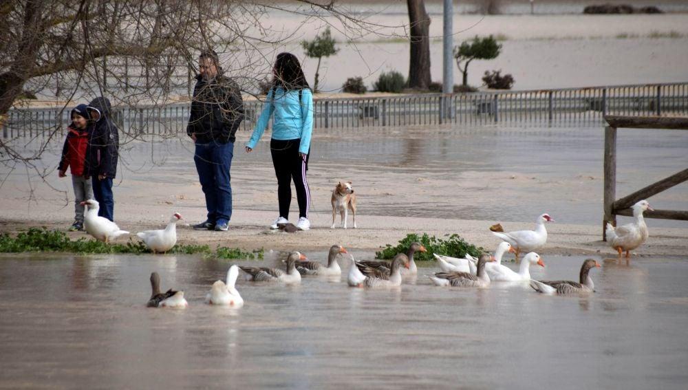 Varias personas en la zona afectada tras el desbordamiento del río Genil