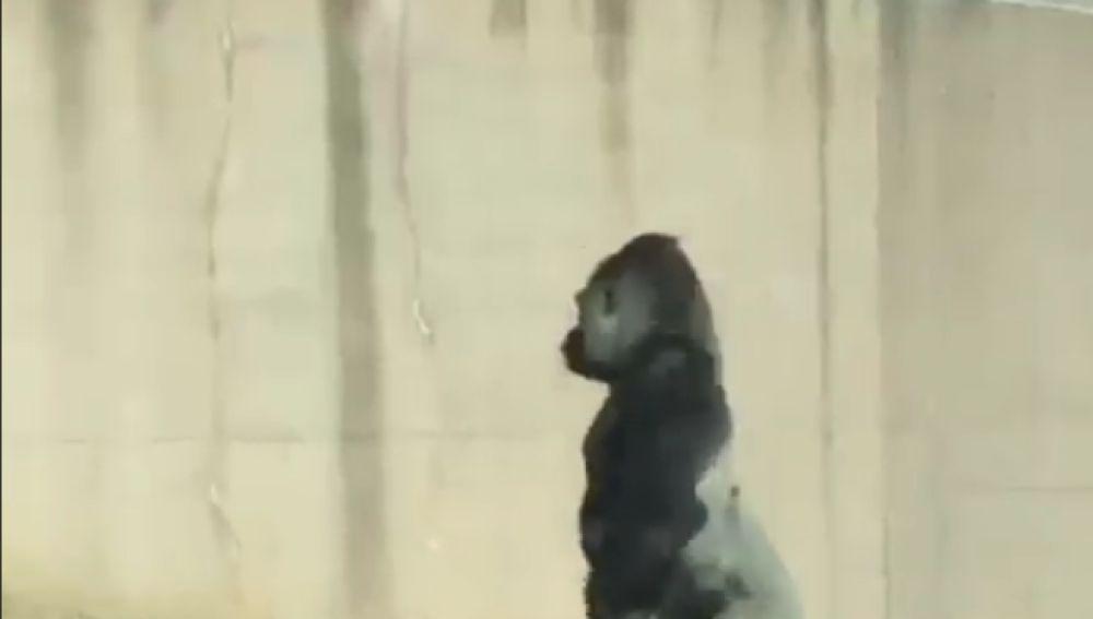 El gorila Louis