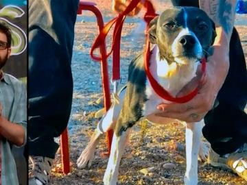Adopta a  Poli, un perrito muy valiente con mucho amor para dar