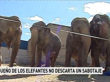 Pacma estudia acciones legales por posibles irregularidades en el traslado de los elefantes accidentados en la A-30