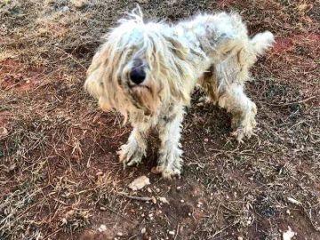 Molly, la perra abandonada