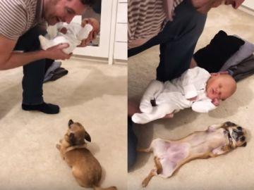 Un perro conoce al bebé de sus dueños