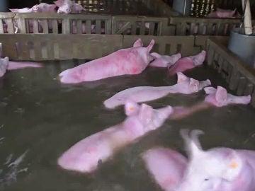 Imagen de una de las granjas afectadas por la crecida del Ebro