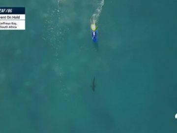 Suspenden la Liga Mundial de Surf en Australia por ataques de tiburones