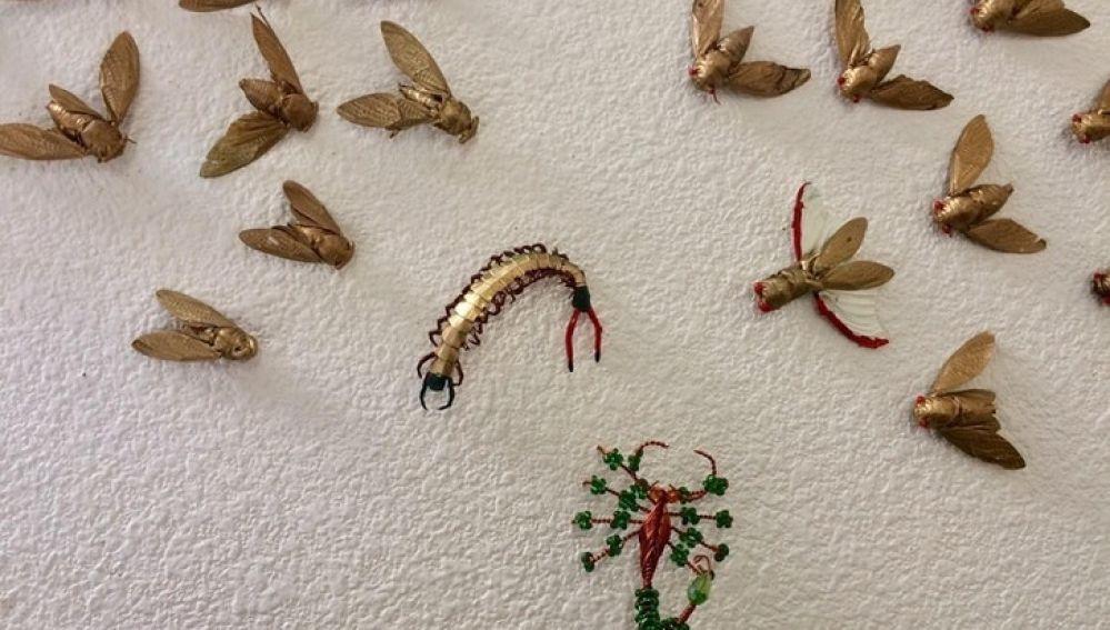 Insectos disecados
