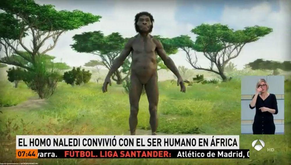 Reconstrucción del Homo Naledi