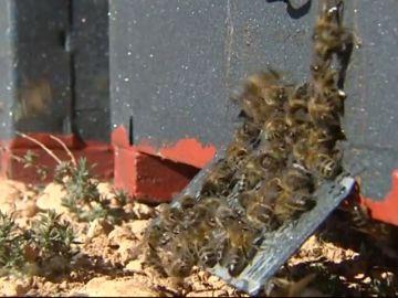 La UE da luz verde a restringir el uso de pesticidas dañinos para las abejas