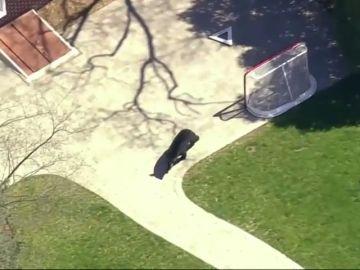 Un oso negro ronda por Nueva Jersey